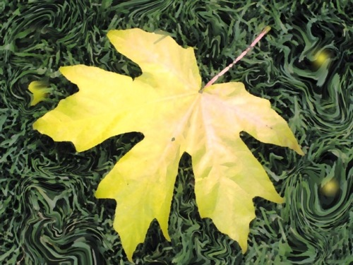 yellow leaf on grass