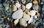 rocks and sea weed